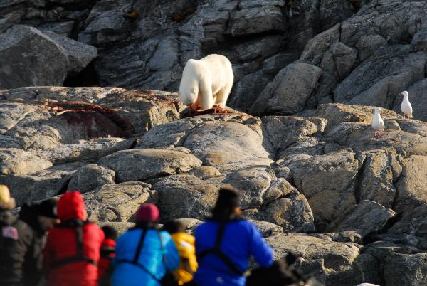 polar-bear-ursus-maritimus-svalbard_72a4-3380x2263px