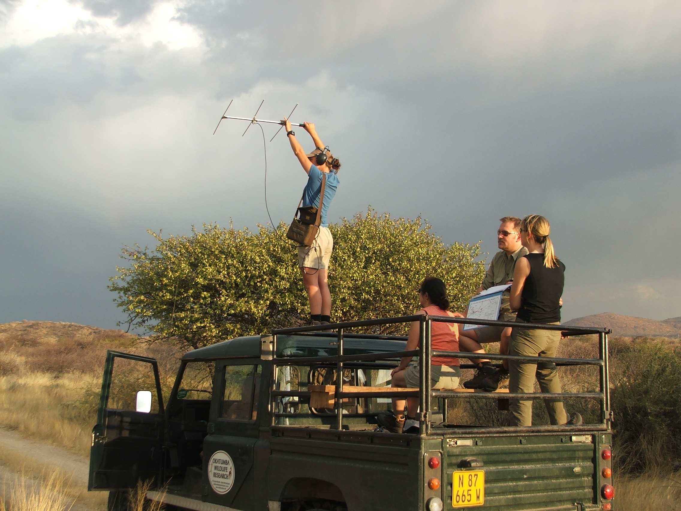 Conservancies support a variety of research projects, such as radio telemetry on large carnivores
