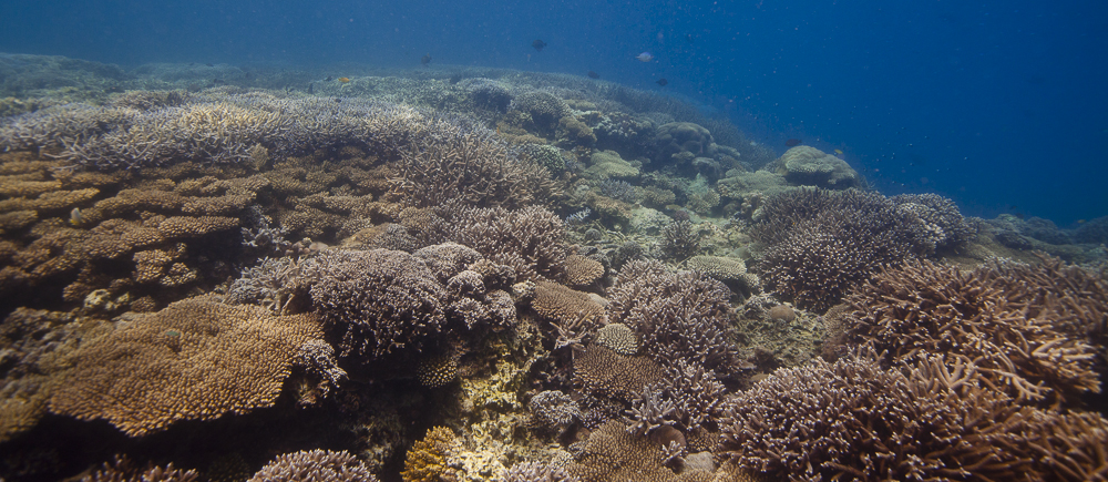 The chumbe mpa hosts over 90% of East Africa's hard coral species