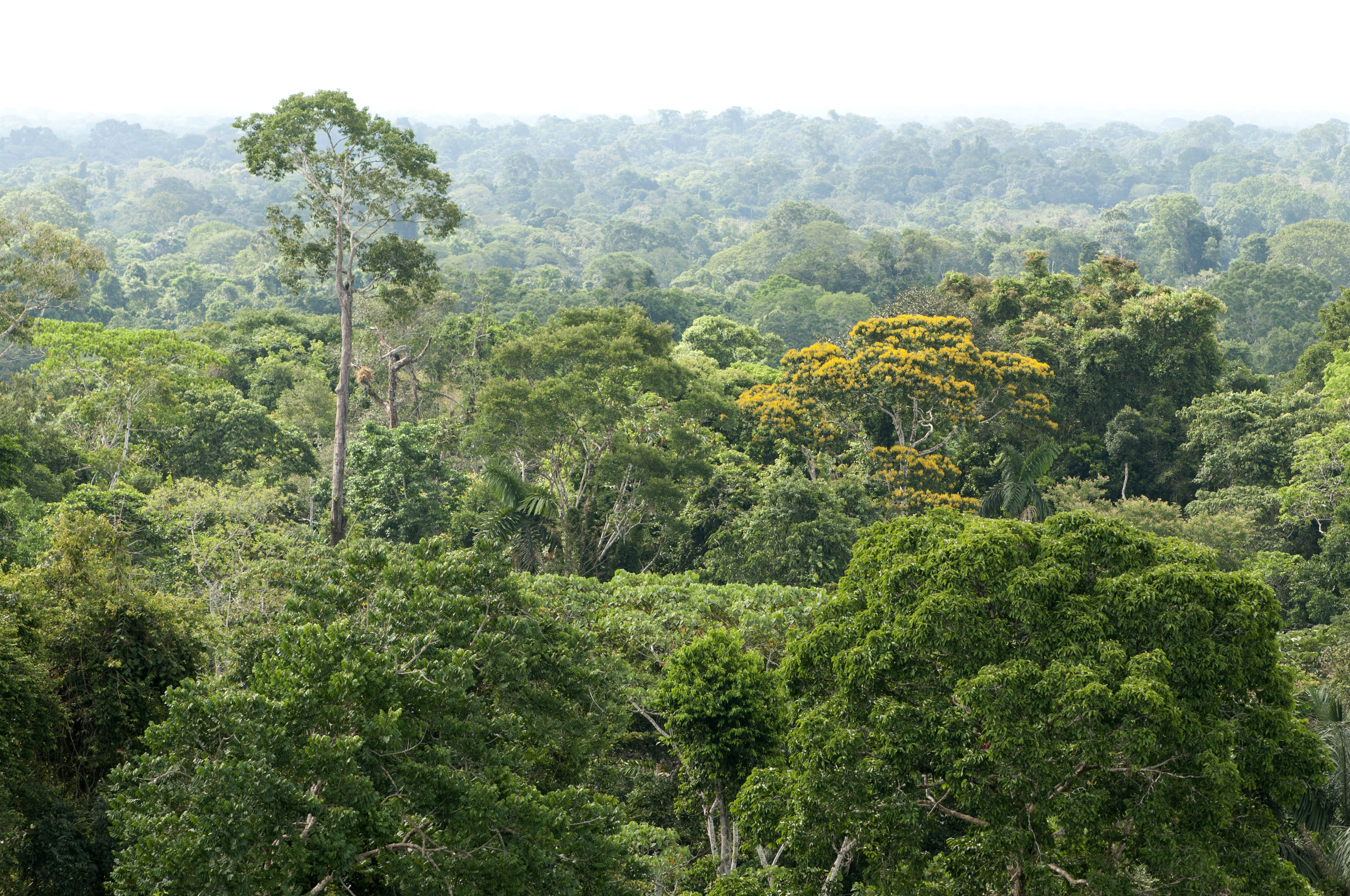 amazone-rainforest-yasuni-national-park-ecuador_75b1-3500x2324px