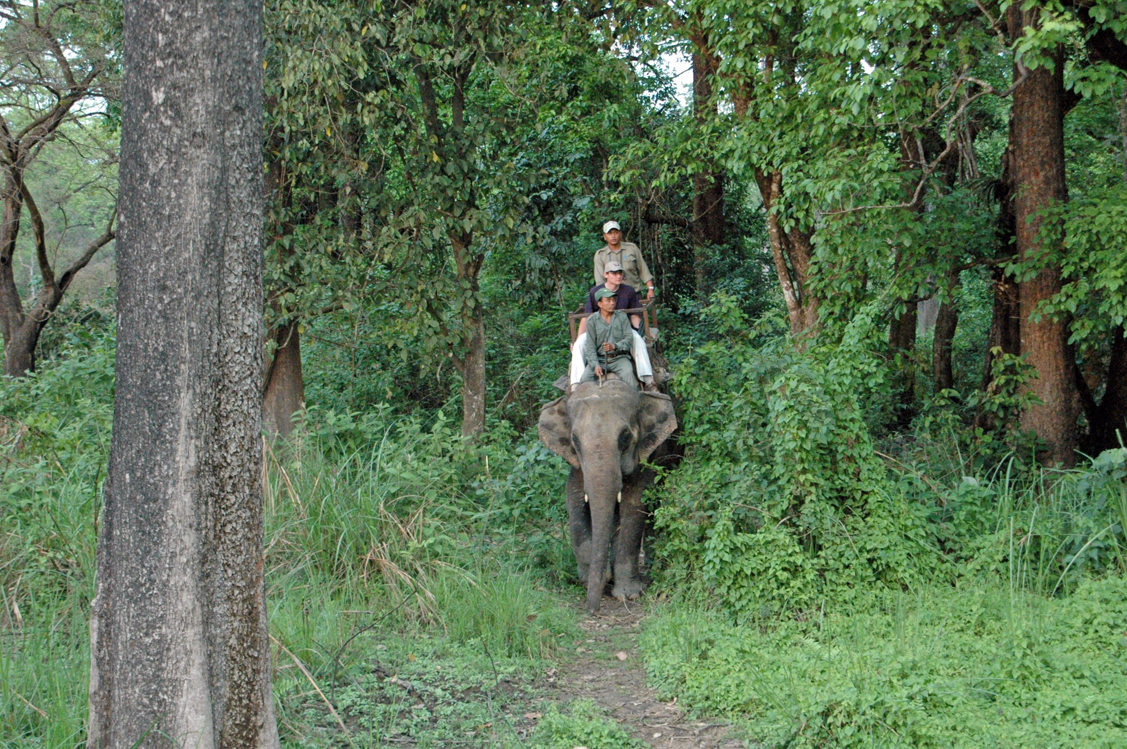 Bardia Nepal  City pictures : Chitwan and Bardia national park, Nepal | Linking Tourism ...