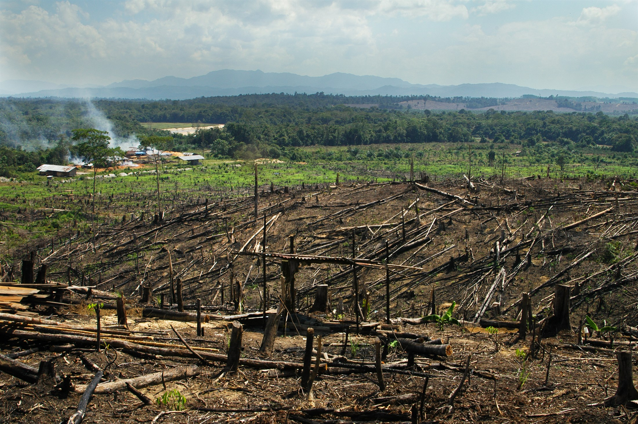 burning-rainforest-on-sumatra-to-make-space-for-palm-oil-plantations-indonesia_8277-2200x1462px
