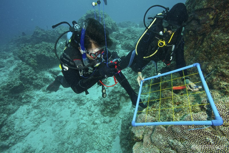 Researchers from Silliman University and CCEF (Coastal Conservation Education Foundation) do a quadrant study of the corals of Apo Islands Marine Protected Area (MPA).