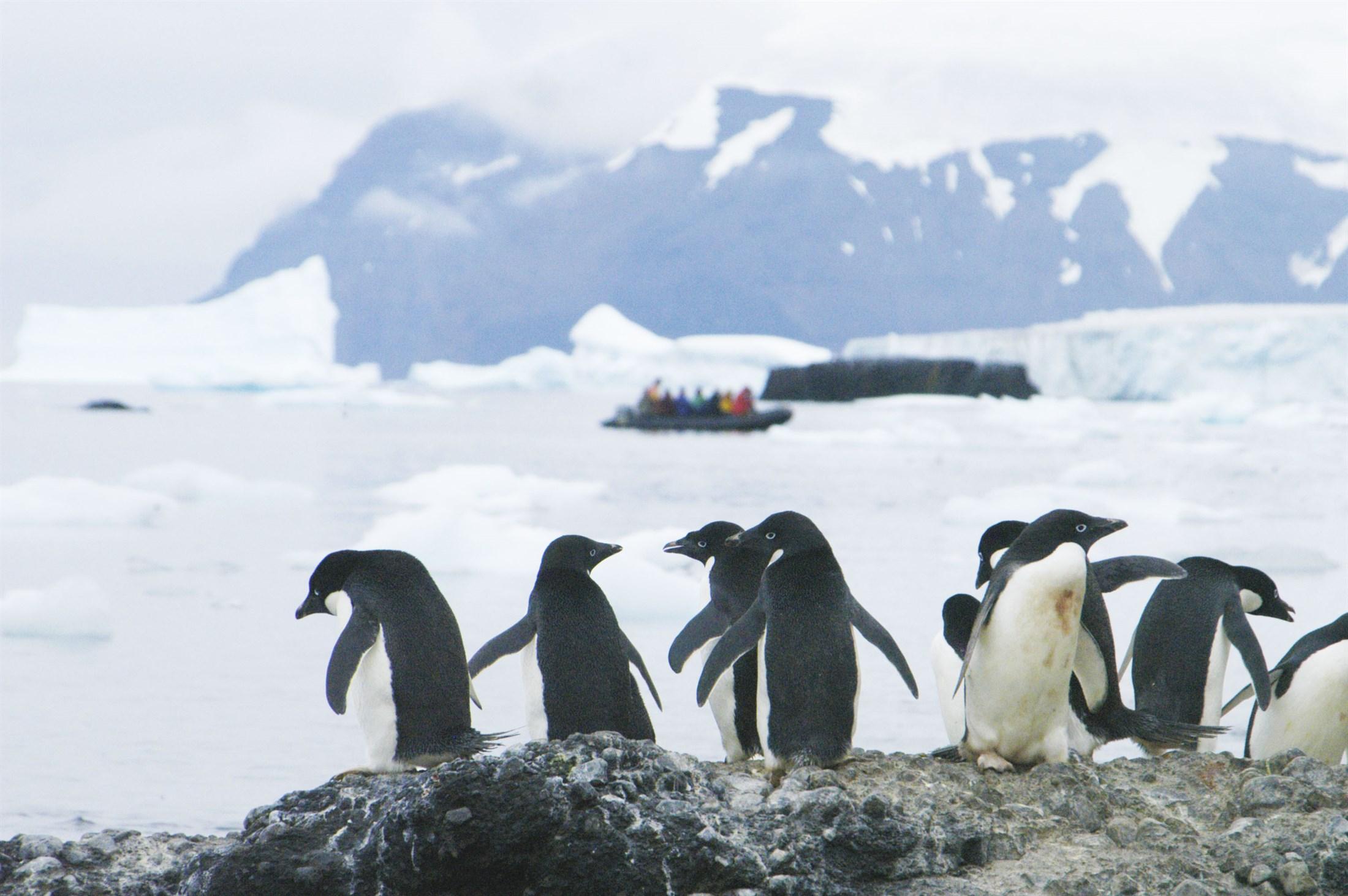 adlie-penguins-pygoscelis-adeliae-with-tourists-in-background-antarctic-peninsula_4bc7-2200x1462px
