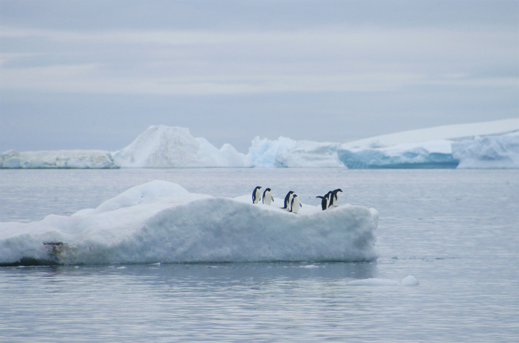 glacier-ice-and-sea-ice-adelie-penguinsantarctic-peninsula_61fb-2200x1455px