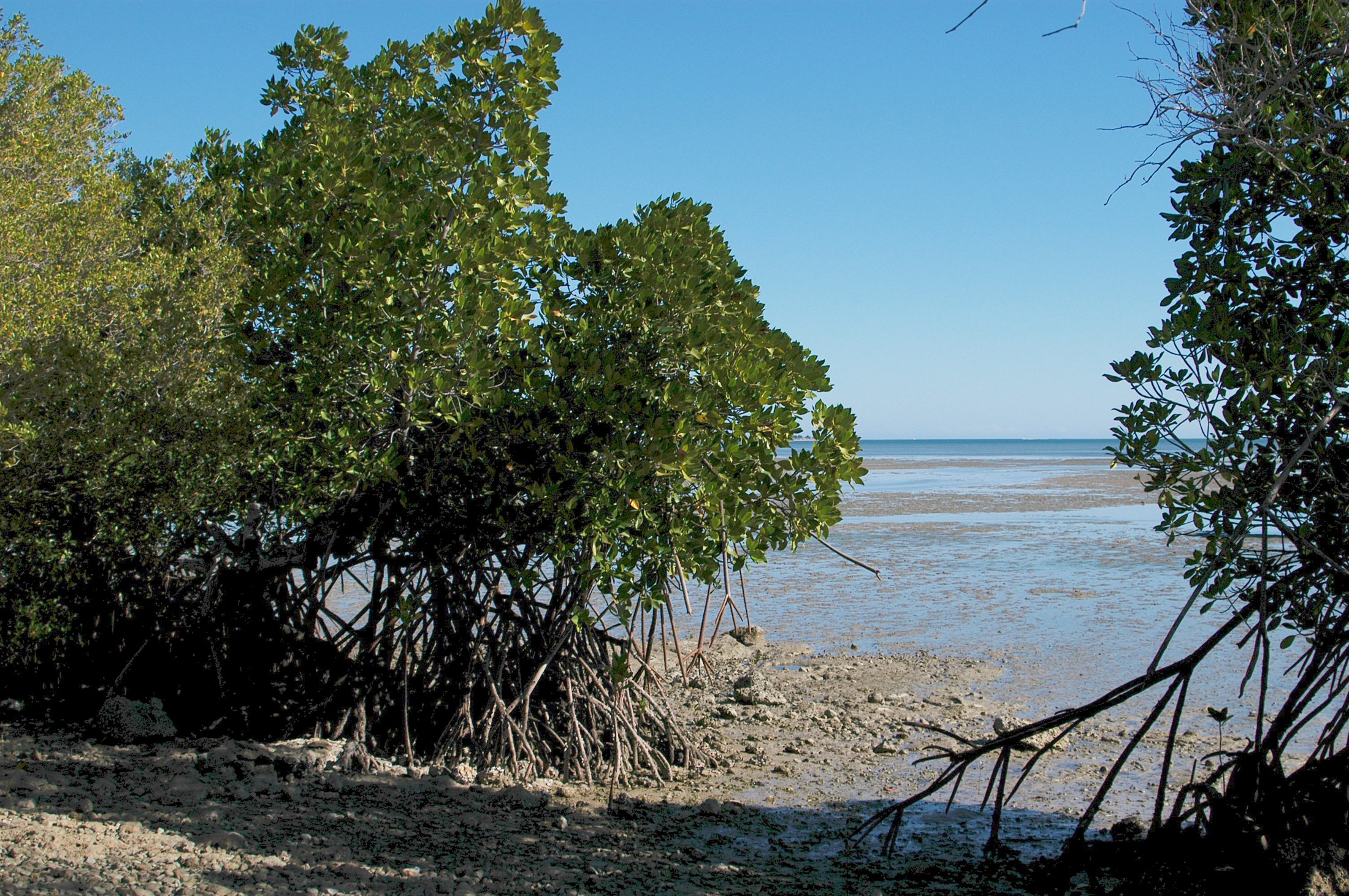 mangroves-near-toliara-south-west-madagascar_3fd4-2200x1462px