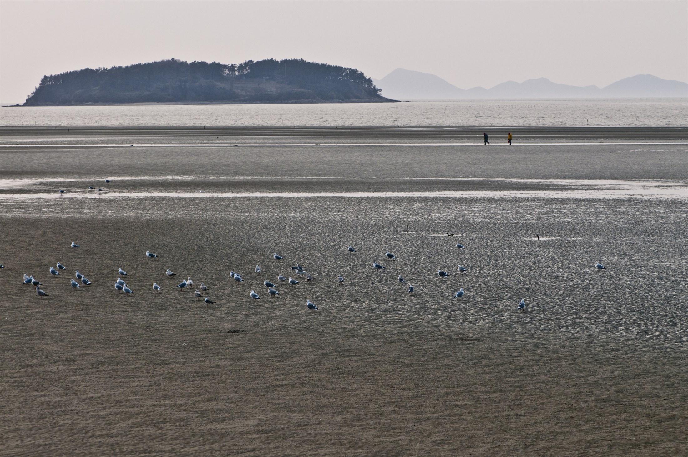 tidal-flats-south-korea-west-coast_f90d-2200x1461px