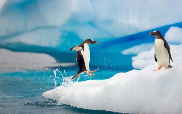 penguin-running-on-ice