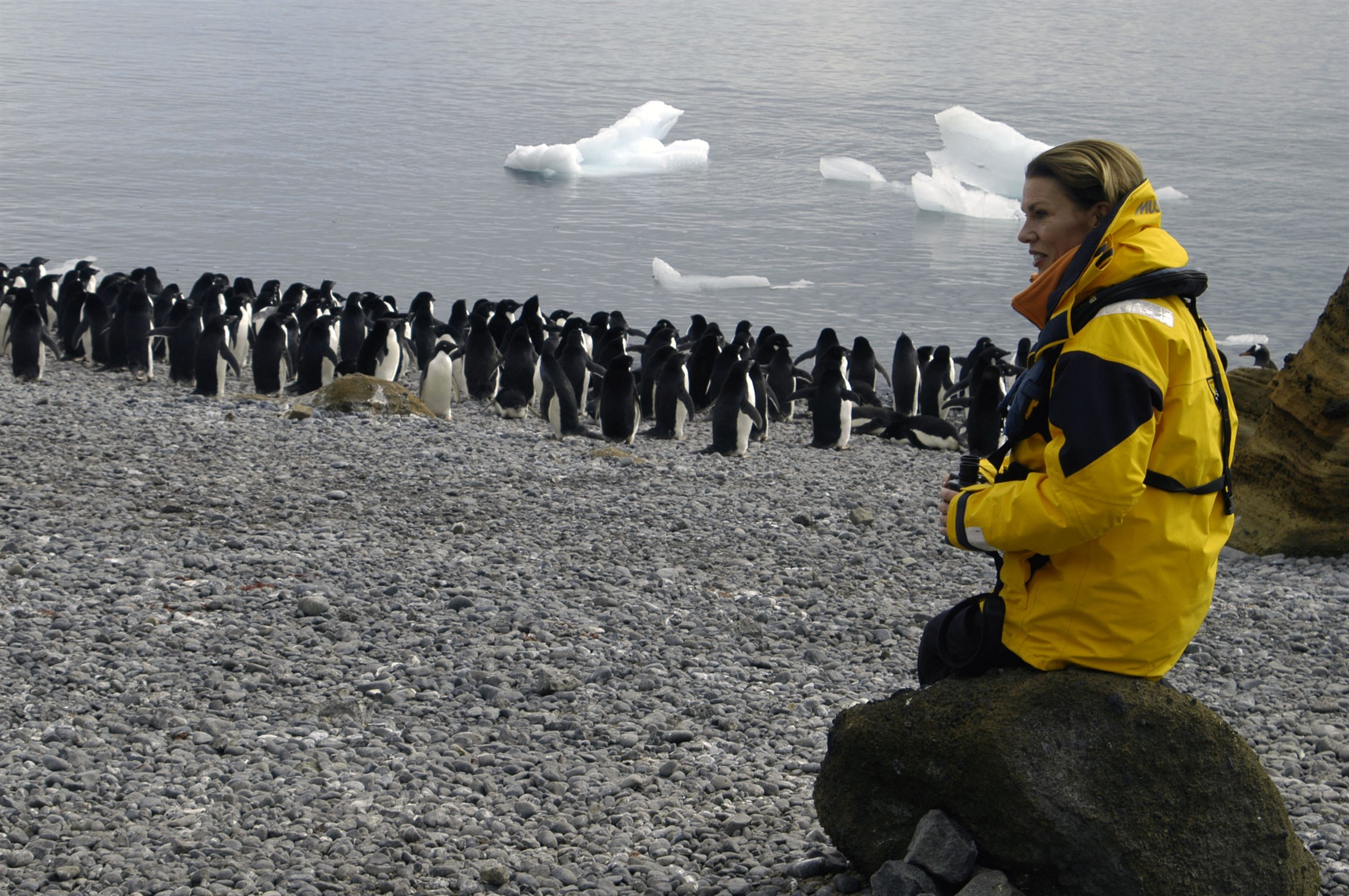 Tourist with penguins