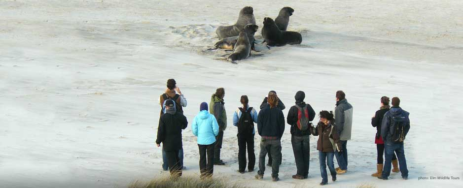 Wildlife tours on the peninsula