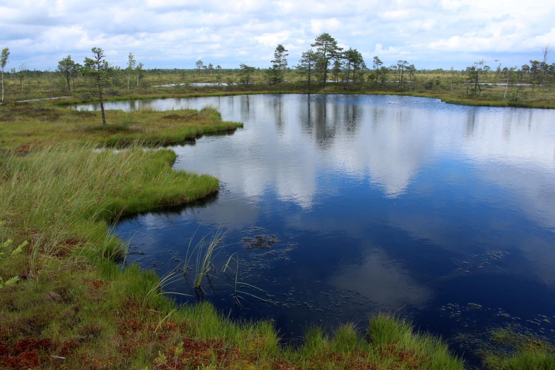 Bog pool Soomaa National Park