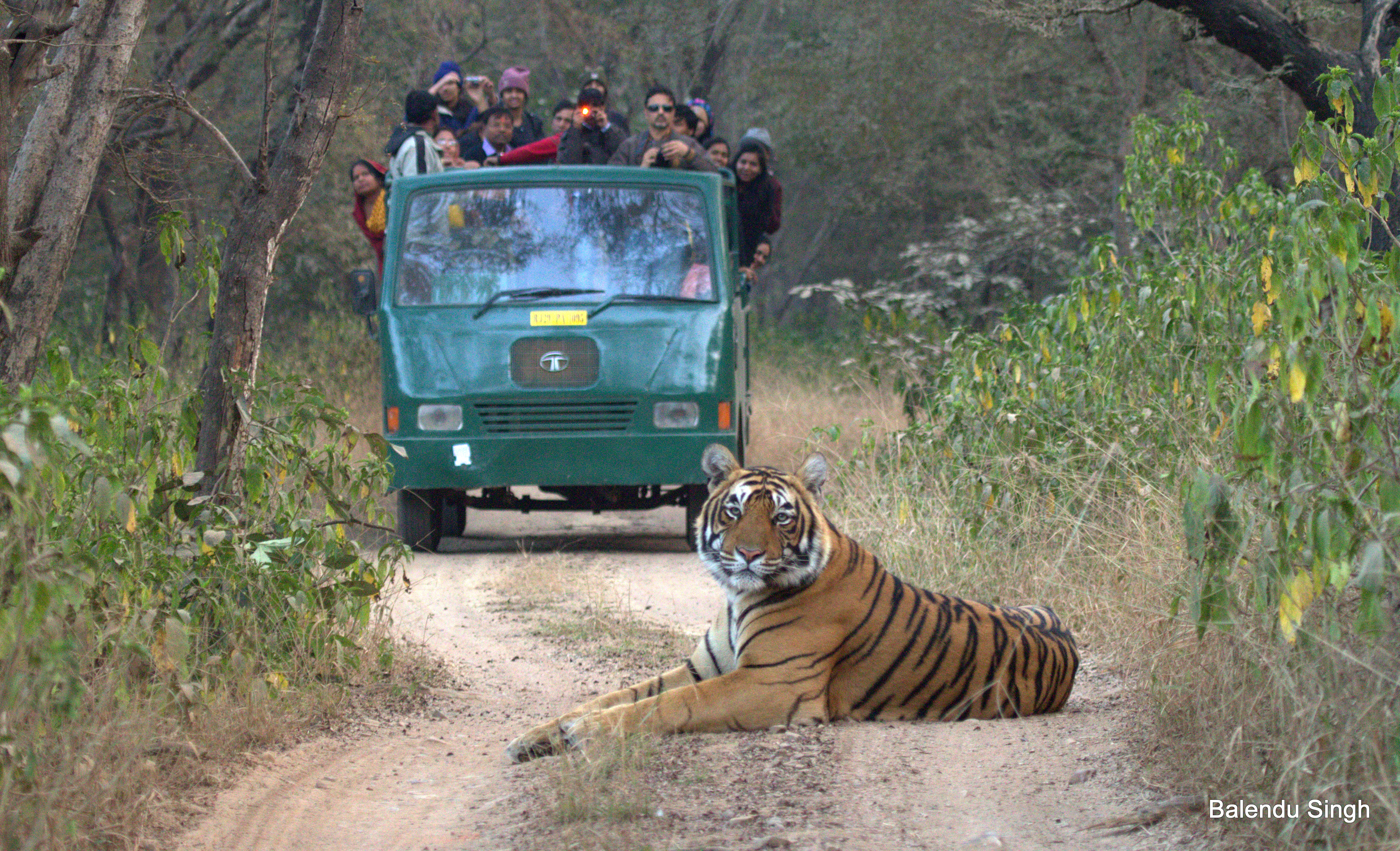 Tiger sighting in Ranthambore
